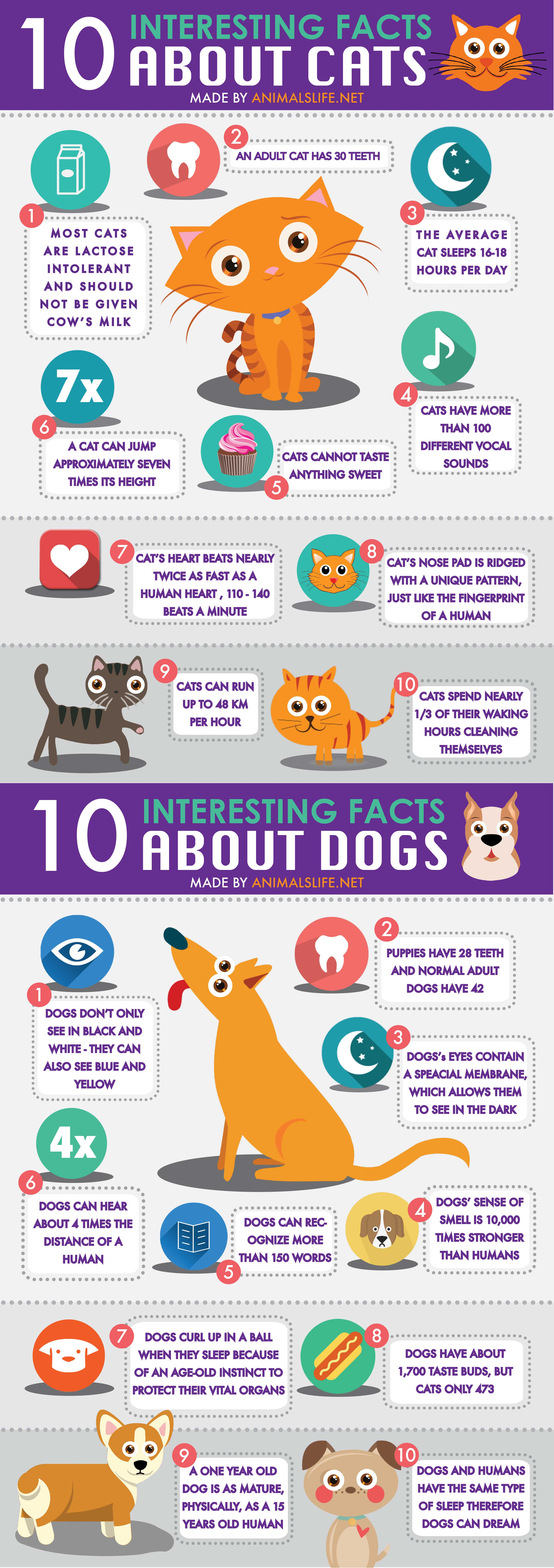 10 facts about cats infographics