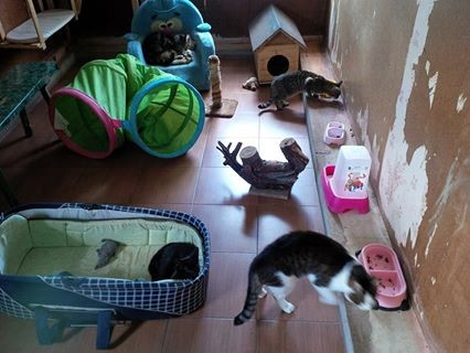 otra-maja-cat-room