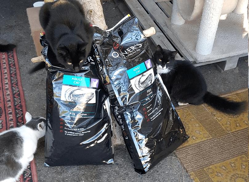 beglobis-cat-shelter