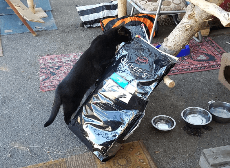 beglobis-cats