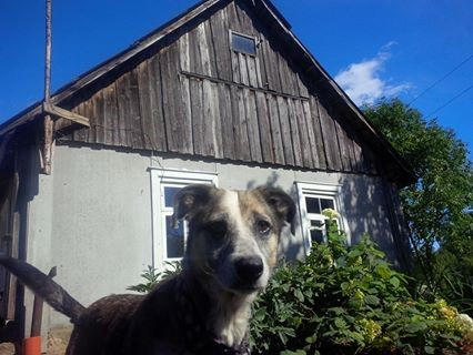 otra-maja-dog