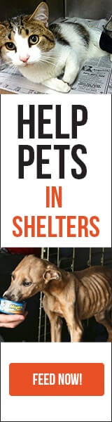 Feed-pets-in-shelters-online