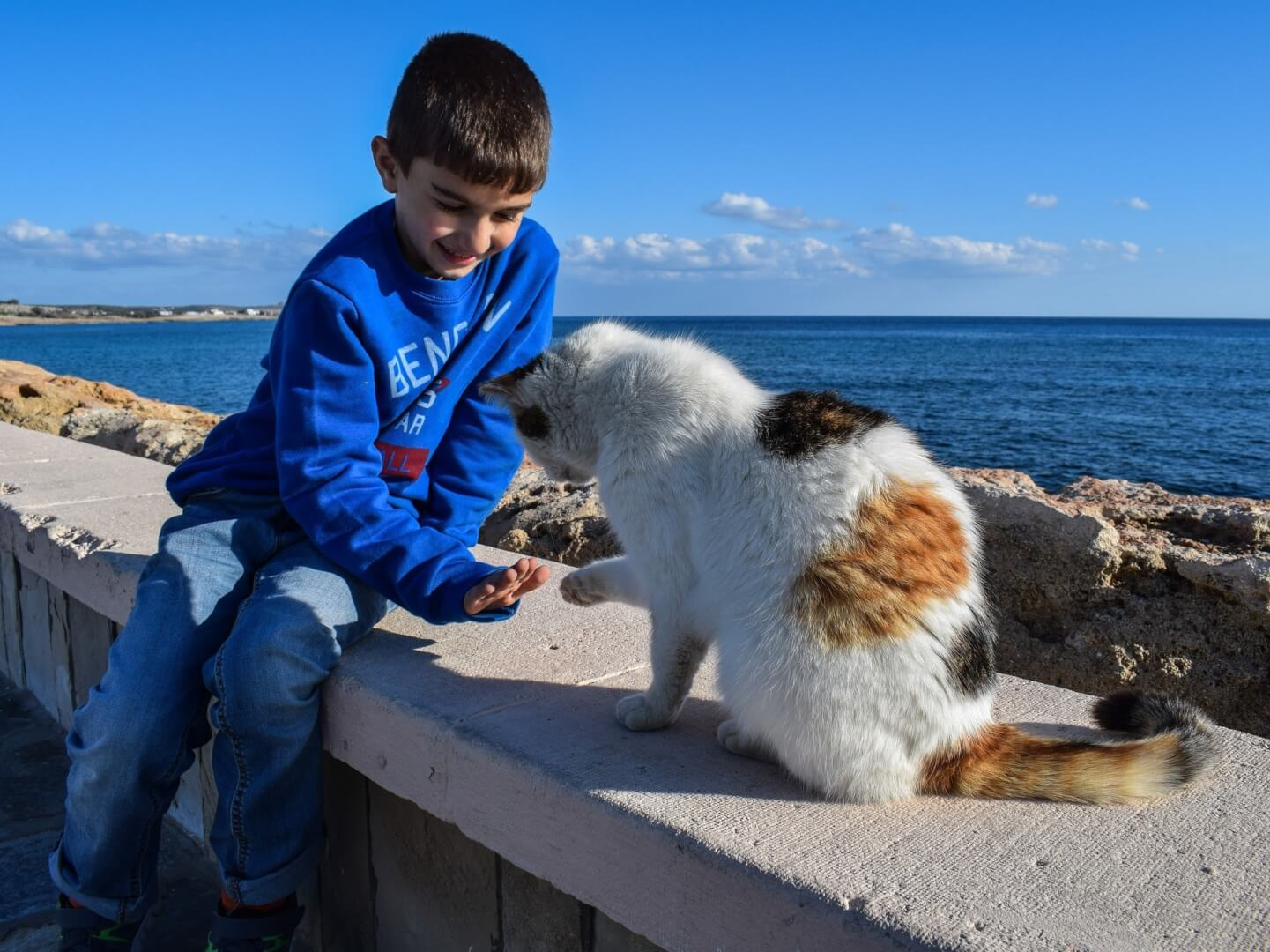 cat-adopted-by-kid